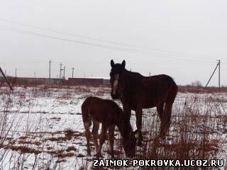http://zaimok-pokrovka.ucoz.ru/_ph/9/2/610442063.jpg